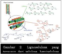 Lignoselulosa yang tersusun dari selulosa, hemiselulosa dan juga lignin